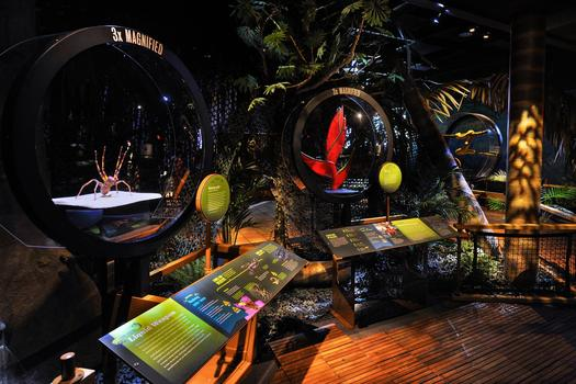 Life-size walkthrough environment of a remote Colombian forest called Chocó.