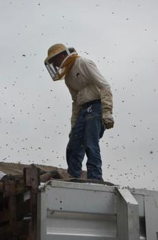 Beekeeper Alex Warcola helps tie the load back down