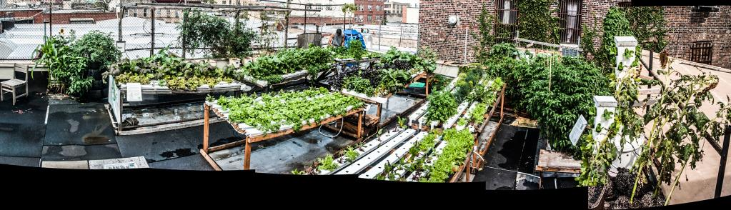 The rooftop farm at the Bushwick Starr Theater (panorama), Spring 2012.