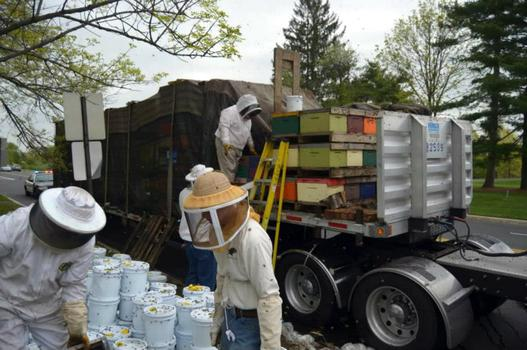"""About three dozen boxes of bees shifted off the gallon syrup pails they were, unfortunately, loaded on top of,"" said Katz."