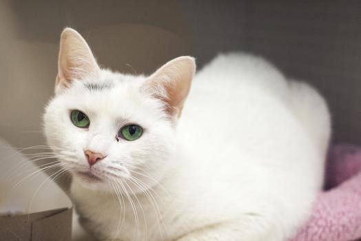 Miss Pearl, 4.