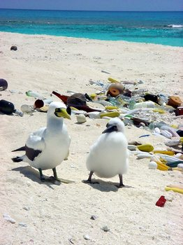 Two birds on a plastic-covered beach.