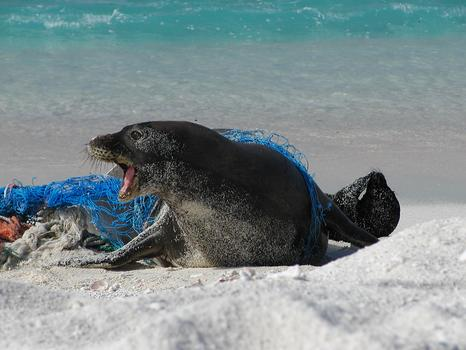 Seal in net.