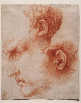 <em>Studies of a Head in Profile, c. 1622</em>