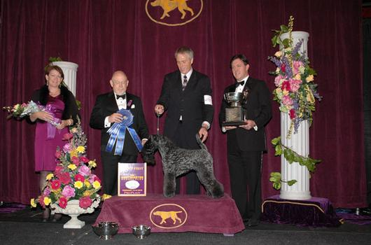 2012 Terrier Group Winner