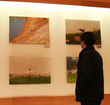 The photographs are of Ahae's property in South Korea, which he maintains as an organic, pesticide-free habitat.