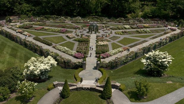 The Peggy  Rockefeller Rose Garden from above.