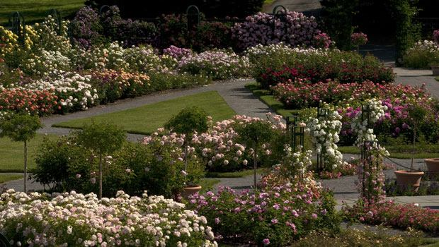 The landscape design of the Rose Garden at the New York Botanical Garden.
