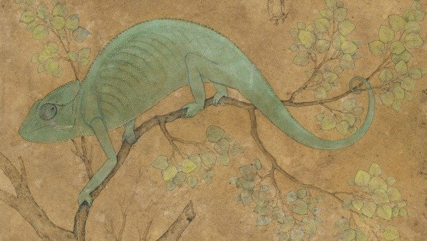"""Chameleon"" by Mansur, circa 1595, is part of the ""Wonder of the Age"" show opening at the Met Museum on Wednesday."