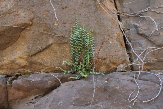 A plant growing in the cracks of the stones that make up the Embankment.