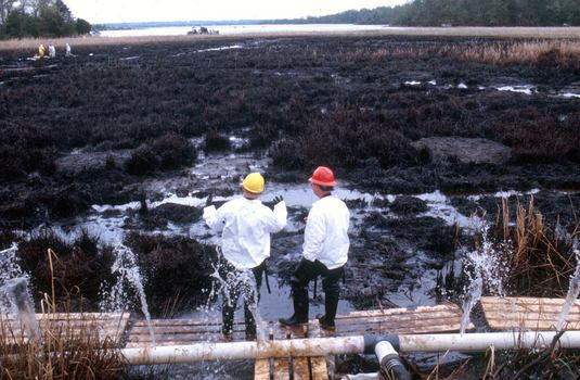 Swanson Creek marsh covered in oil after the 2000 spill.