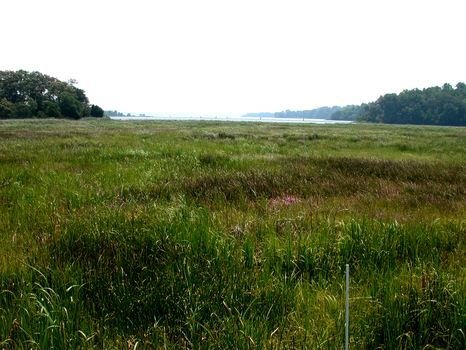 Swanson Creek Marsh 2 years later after a successful clean up operation.)