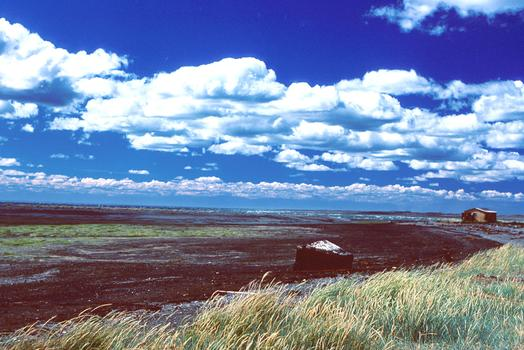 Oil in the marshes near Tierra del Fuego, a year and a half after the Metula oil spill in 1974.