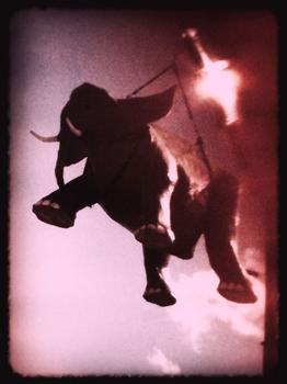 """""""When Elephants Fly,"""" by Matthew Watkins"""
