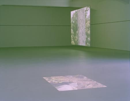 Zink Yi's exhibit will also include this two-part video installation, titled 'Alrededor del dosel (Around the Canopy),' a meditation on a search for a rare bird through the Amazon.