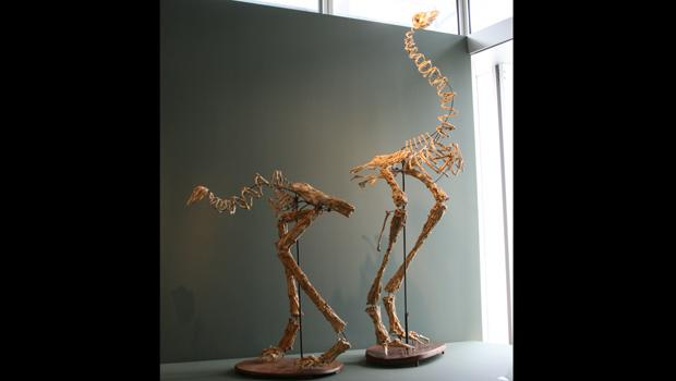 Moa, New Zealand. Christy Rupp, 2007. Fast food chicken bones, mixed media.