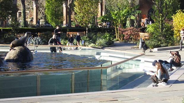 The Central Park sea lion tank.