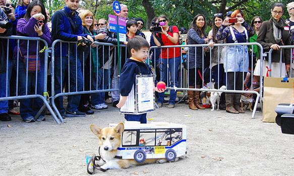 The owner of the winning corgi, Ben, was dressed up as a bus stop to go along with the M23.