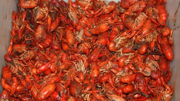 Louisiana seafood is back at Mara's Homemade.  The BP oil spill forced them to change the location of where they received 75 percent of seafood on their menu, like shrimp, crawfish and oysters.