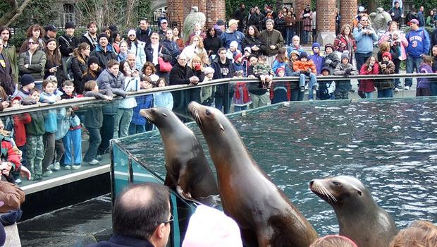 The sea lions in Central Park always attract a crowd.
