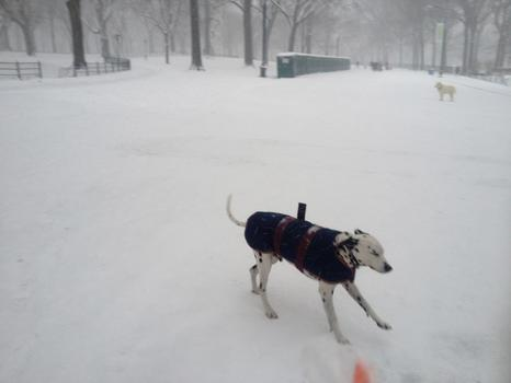 Man's best friend enjoys a romp in the snow.