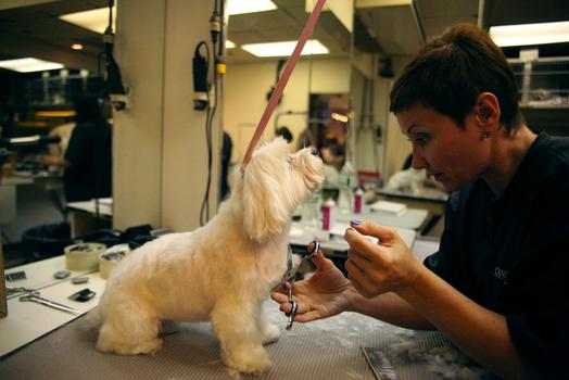 Ella Levitina grooming a dog at Canine Styles.