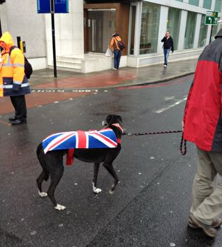 Even canines strutted their stuff for the Jubilee.