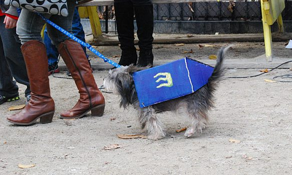 Dreidel Dog, in its simple blue and gold dreidel get-up, came in sixth in the third round of awards.
