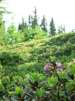 Mountain Flora...