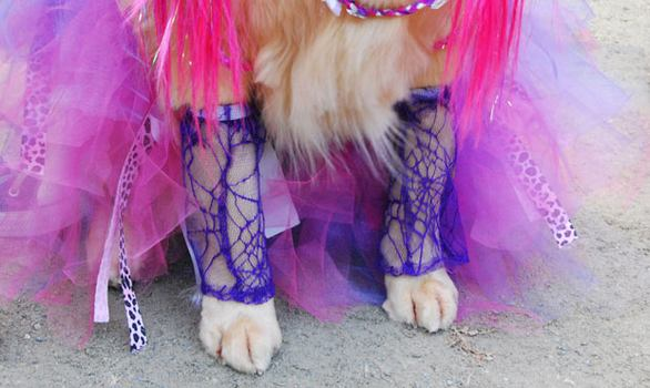 A golden retriever dressed up as Courtney Love wore some pretty boss lace leggings.