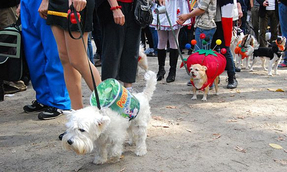 Buttercup (front), dressed up as Popeye's can of spinach, won 11th place in the first round of the awards. Macaroon (middle) won second place in that same round for her pincushion costume.