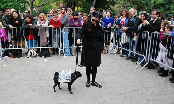 This dog dressed as a QR code placed second in the third round of awards.