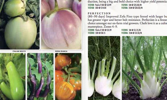 Be the first on your block to have white, orange and green eggplant, even if you live in Red Hook.  Seeds of Change 2011 catalog.