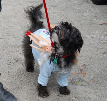 This dog won an award for its Charlie Sheen costume, which was accomplished with naked Barbie dolls and bags of a powdery substance attached to its shirt.