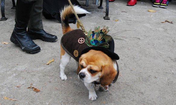 Rosalee, the Steampunk Dog.
