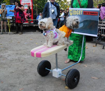 "The crowd was a big fan of these two pups Meteor and Fifi-Gigi  who were wheeling around and hanging 10. Their costume, ""Gidget Goes to Tompkins,"" won the ""Spirit of the East Village"" award."