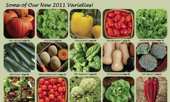 I usually turn right to the new varieties for 2011 in any seed catalog. Here are some highlights from High Mowing Organic Seeds.