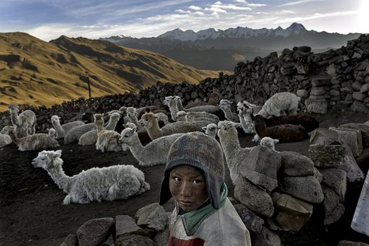 In Bolivia, Alvaro Kalancha Quispe, 9, opens the gate to the stone pen that holds the family's alpacas and llamas each morning so they can graze throughout the hillsides during the day.