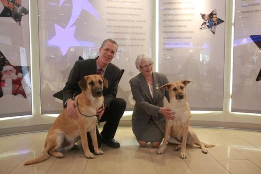 Chinooks Tagluk and Talis, with breeders Perry and Patricia Richards
