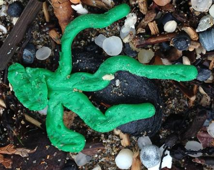 A piece of Lego sea grass.