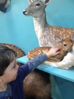 The kids loved to get up close to all the taxidermy.