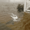 A doctored image shared during Hurricane Sandy shows a shark swimming in a flooded residential neighborhood