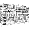 A Wordle image of the birds submitted to the WNYC and New York Times crowdsourced bird-watching map.