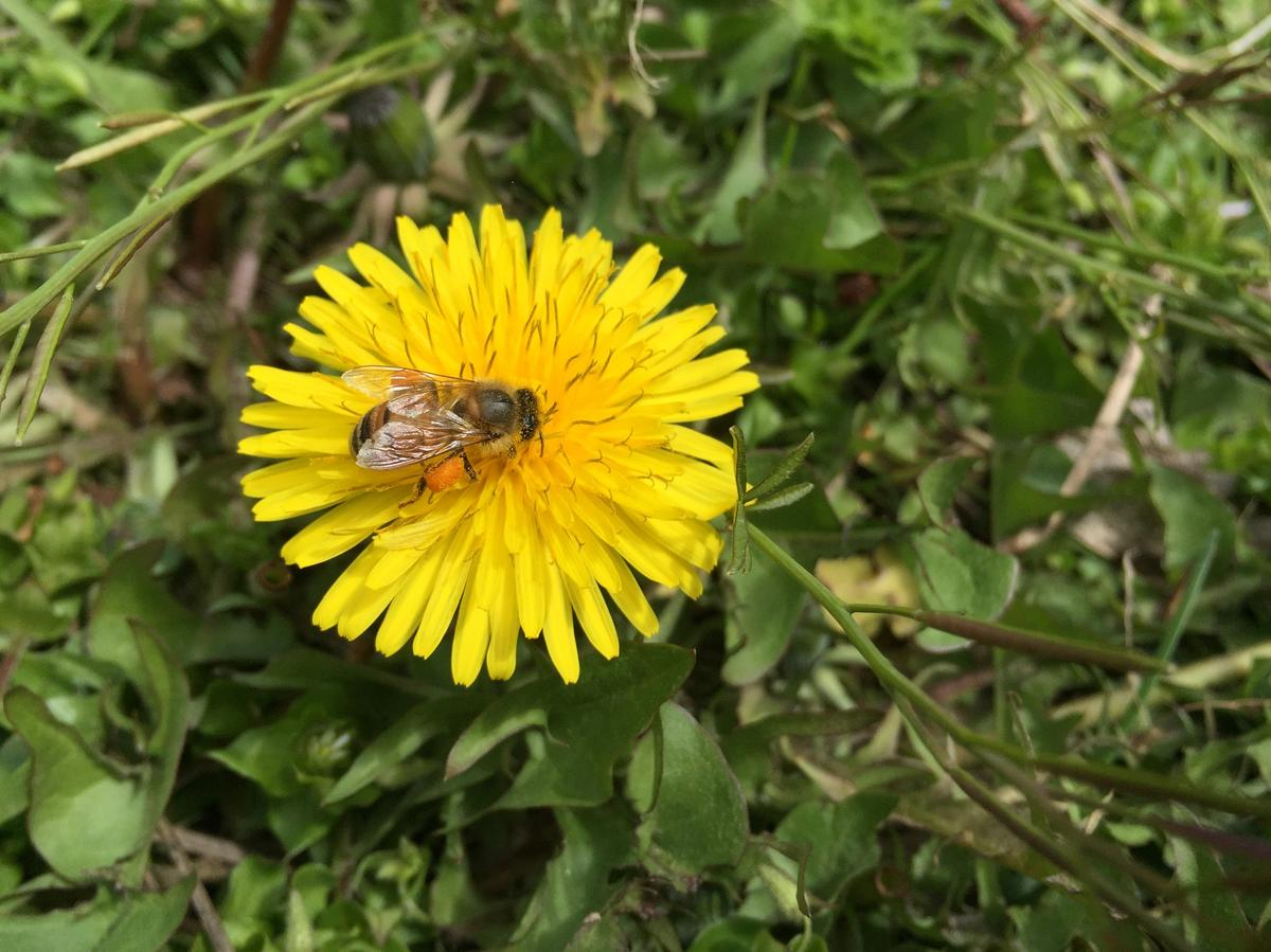 home and garden giant ditches class of pesticides that may harm bees morning edition wnyc