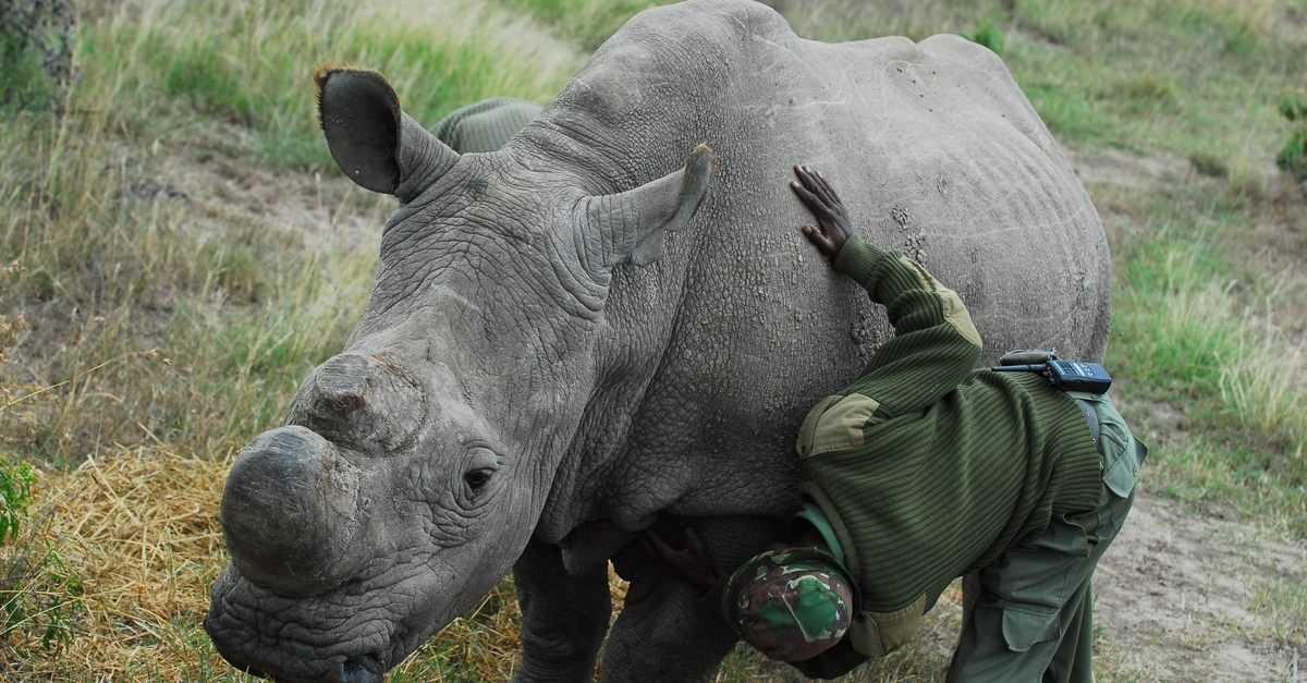 story worlds last male rhino getting help from tinder dating