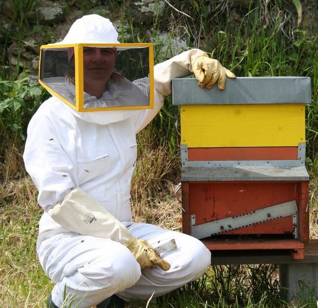 Honeybees Honeybees The Dream Express