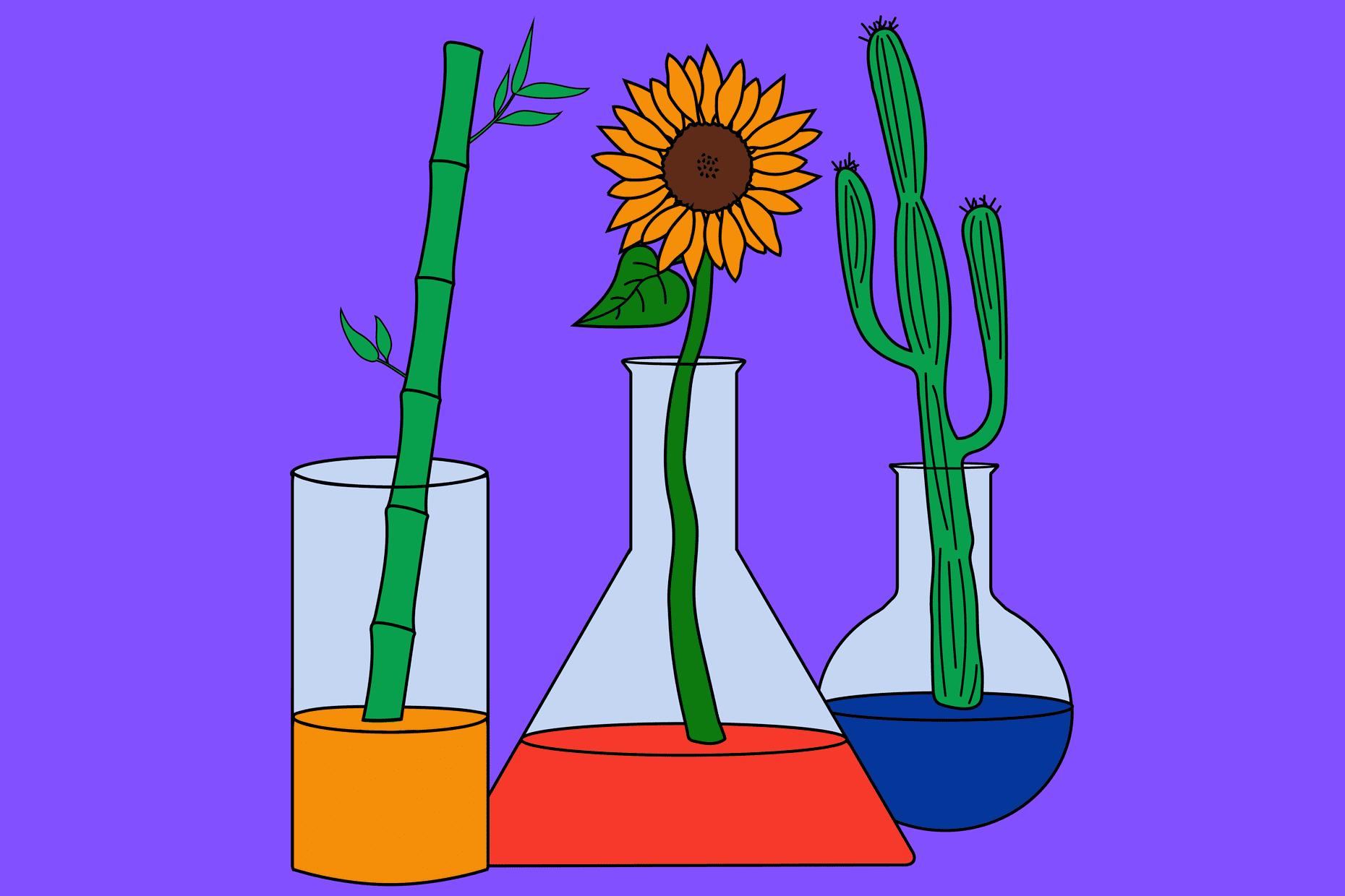 nts plants 11