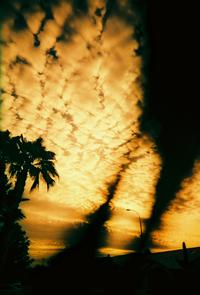 climate change, clouds, palm trees, sky
