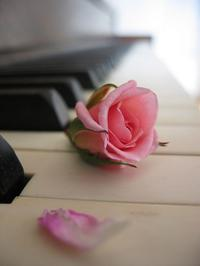 pink rose on a piano keyboard music valentine