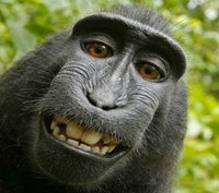 Monkey Self Portrait